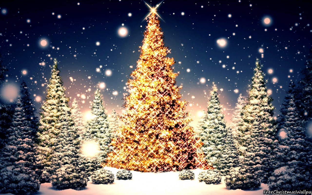 Blessed christmas trees nature 1280x800 wallpaper - Christmas nature wallpaper ...