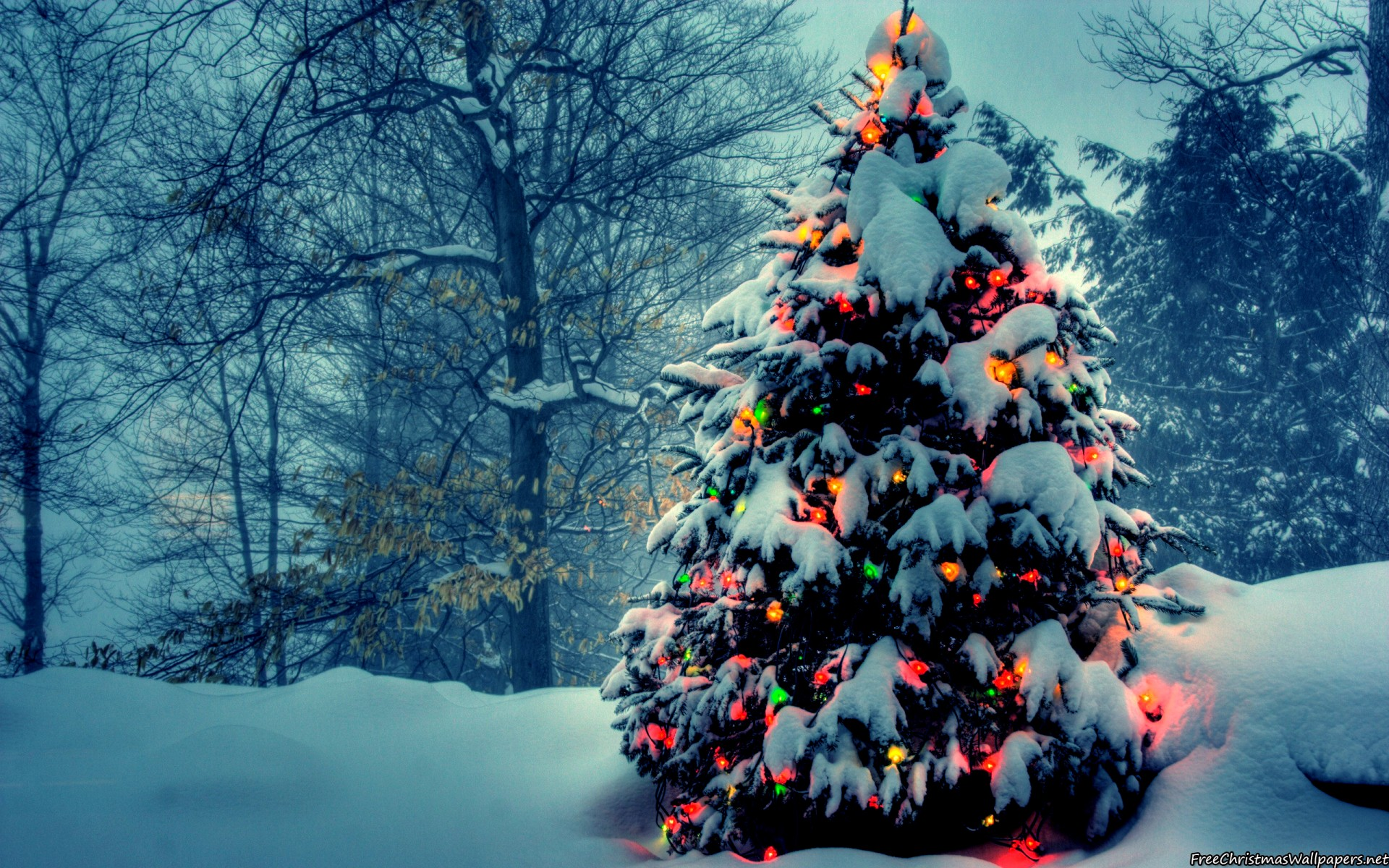 christmas tree with lights in nature press the download button to save or desktop users right click to save or set as desktop background