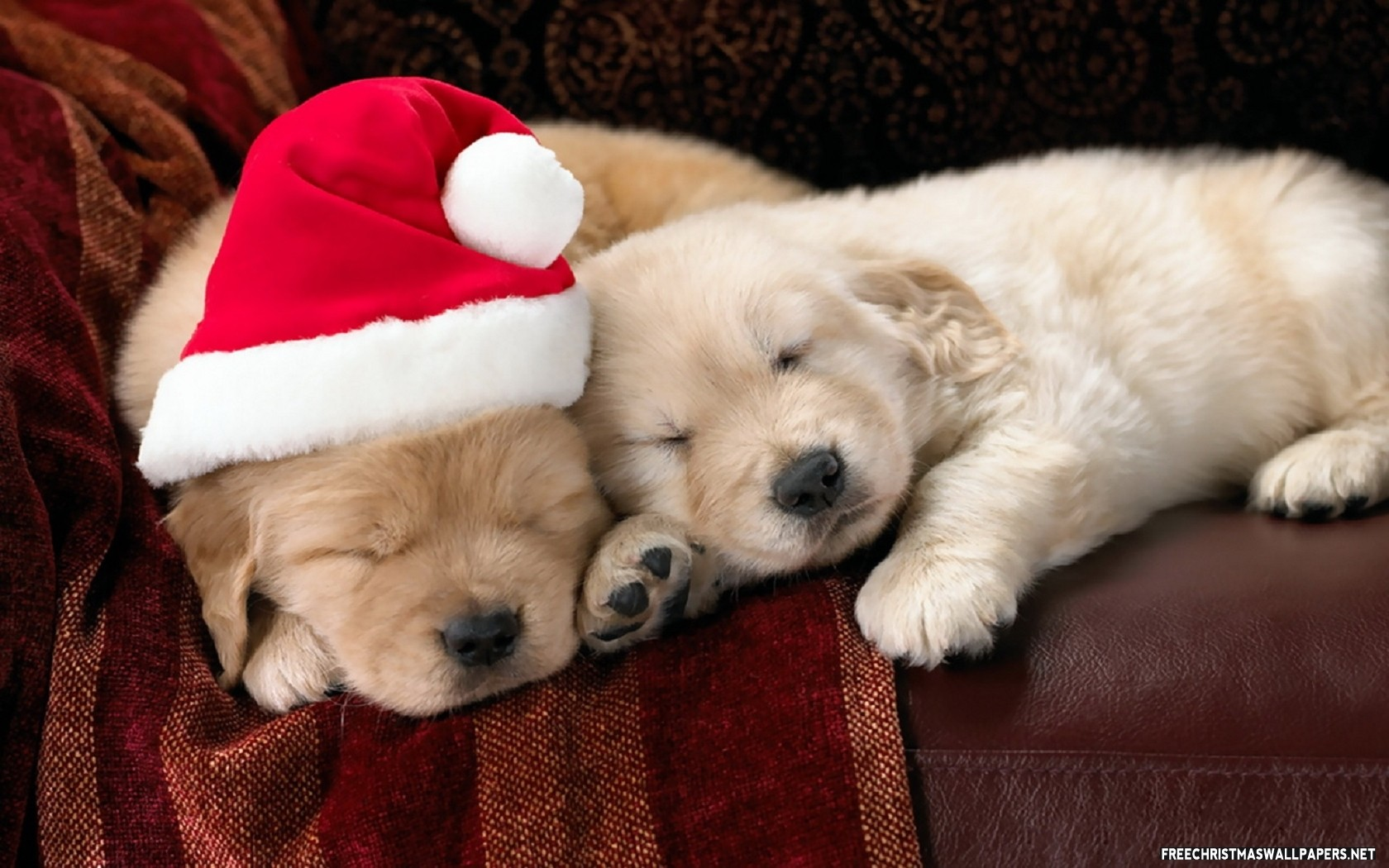 Cute Christmas Puppies