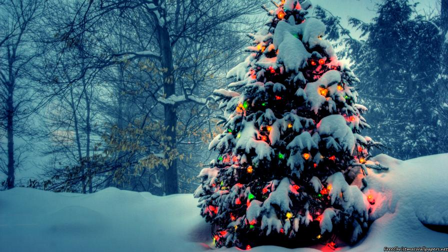 christmas tree with lights in nature