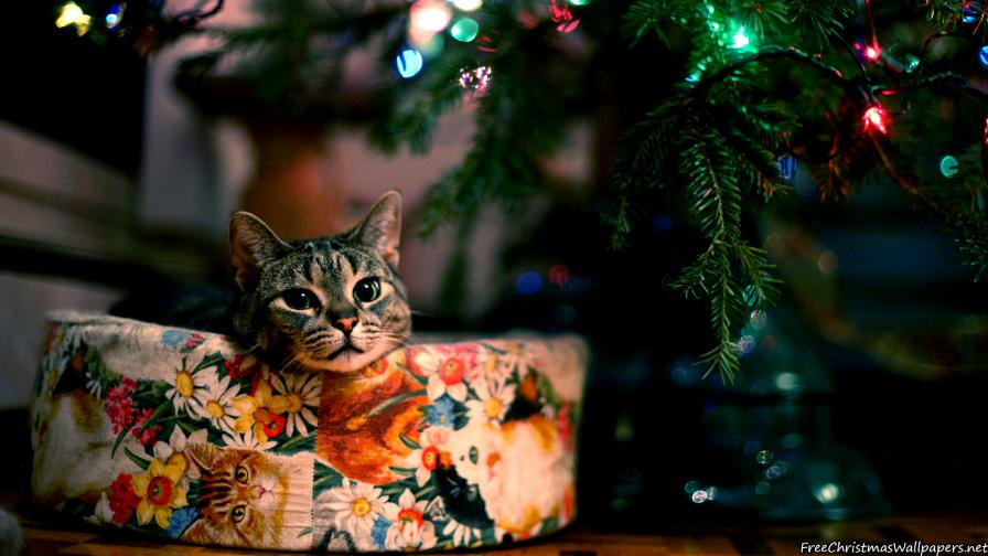 Cute Christmas Cat Wallpaper Freechristmaswallpapers Net