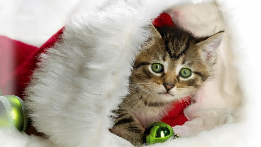 Cute Christmas Kitty Wallpaper Freechristmaswallpapers Net