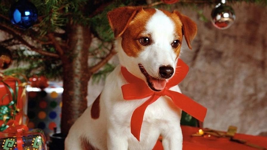 Sweet Dog Under Xmas Tree - Wallpaper - FreeChristmasWallpapers.net