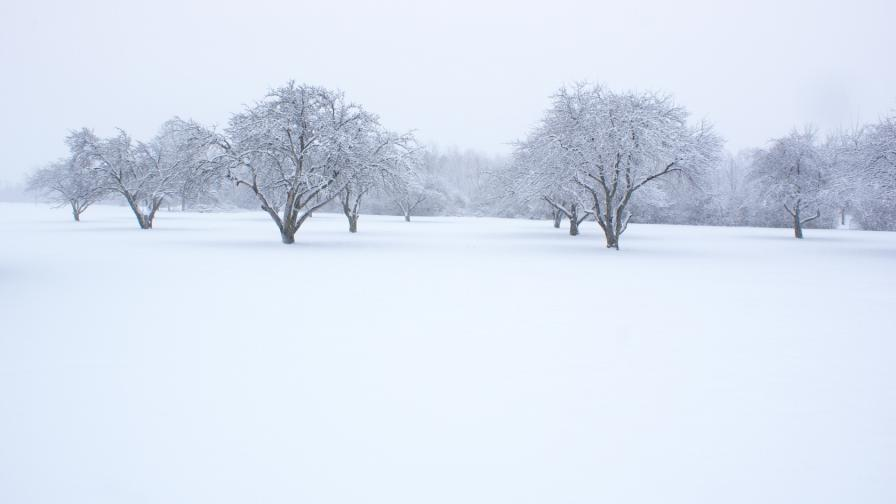 Trees Sleeping In The Snow